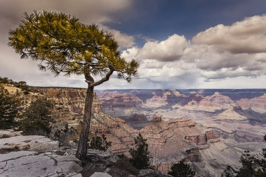 Cool Tree in the Grand Canyon