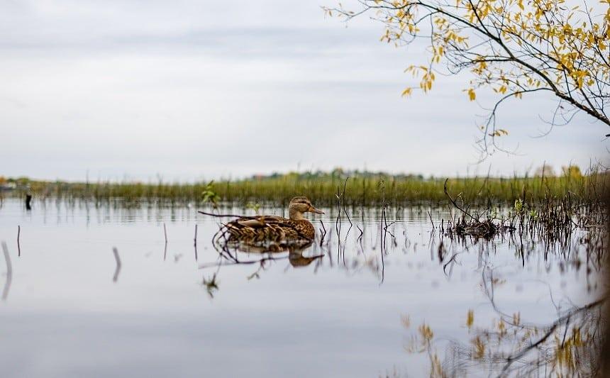 Cut Foot Sioux Lake