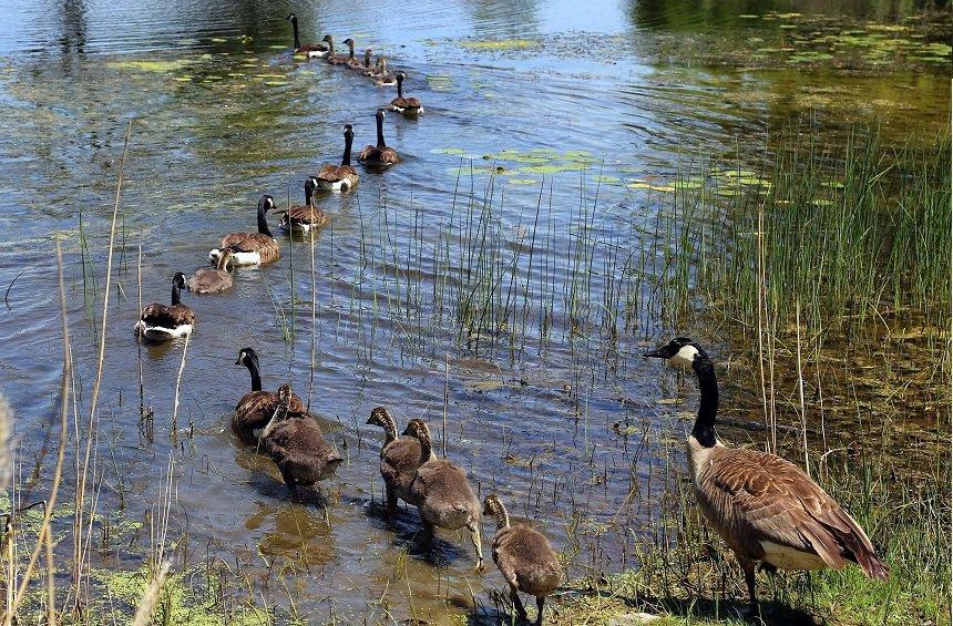 Pontiac Lake