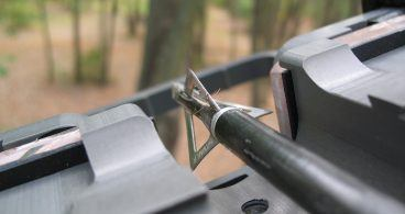 How To Hunt Raccoon: 10 Tips For Hunting During the Day & Night