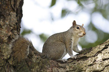 Spotting Squirrels when Hunting