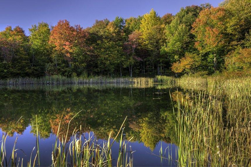 Becks Pond