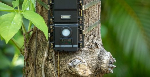 benefits of trail cameras